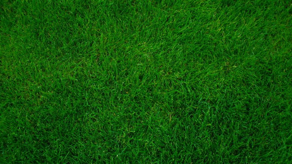 Never Allow Grass To Grow Under Your Feet